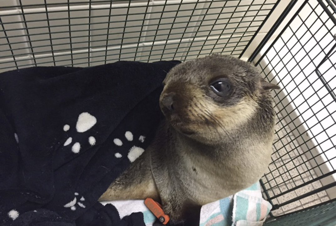 Baby seal found in front yard