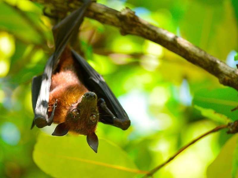 This is how bats can land upside down