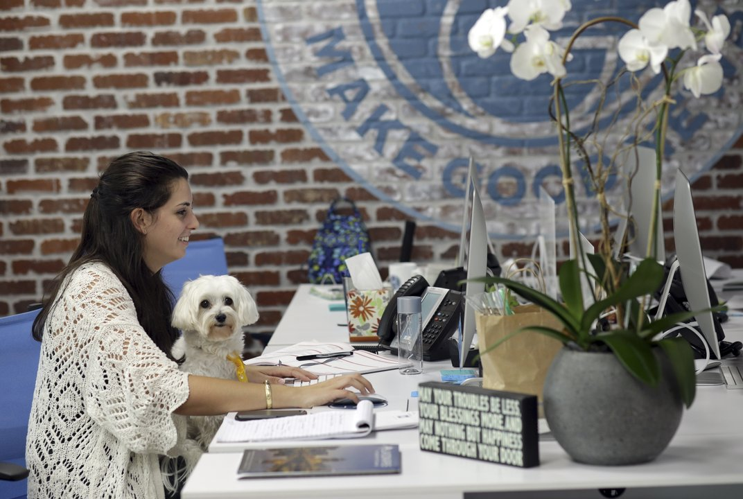 Pets at work have pluses and minuses