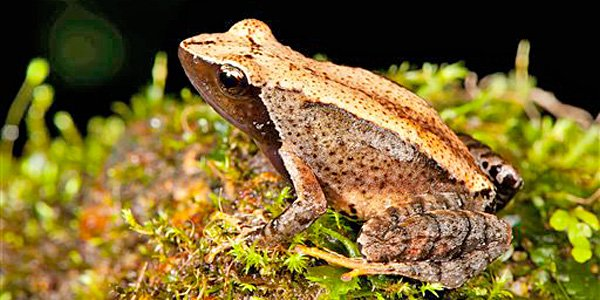 New frogs found. And they dance.