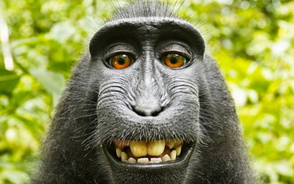 Who owns this photoMan or Monkey?