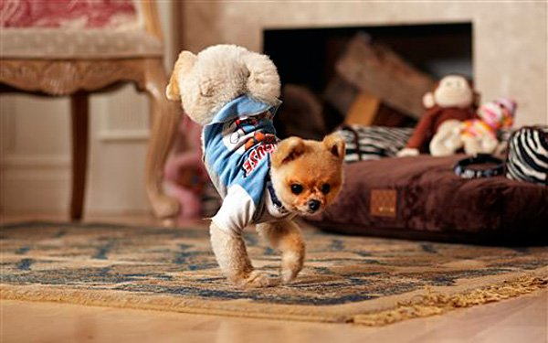 This little dogs got the moves!