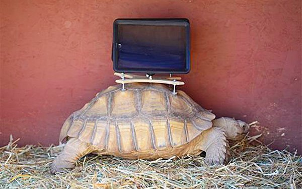 Would a turtle want an iPad on its back?