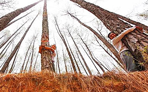 Students set record for hugging trees